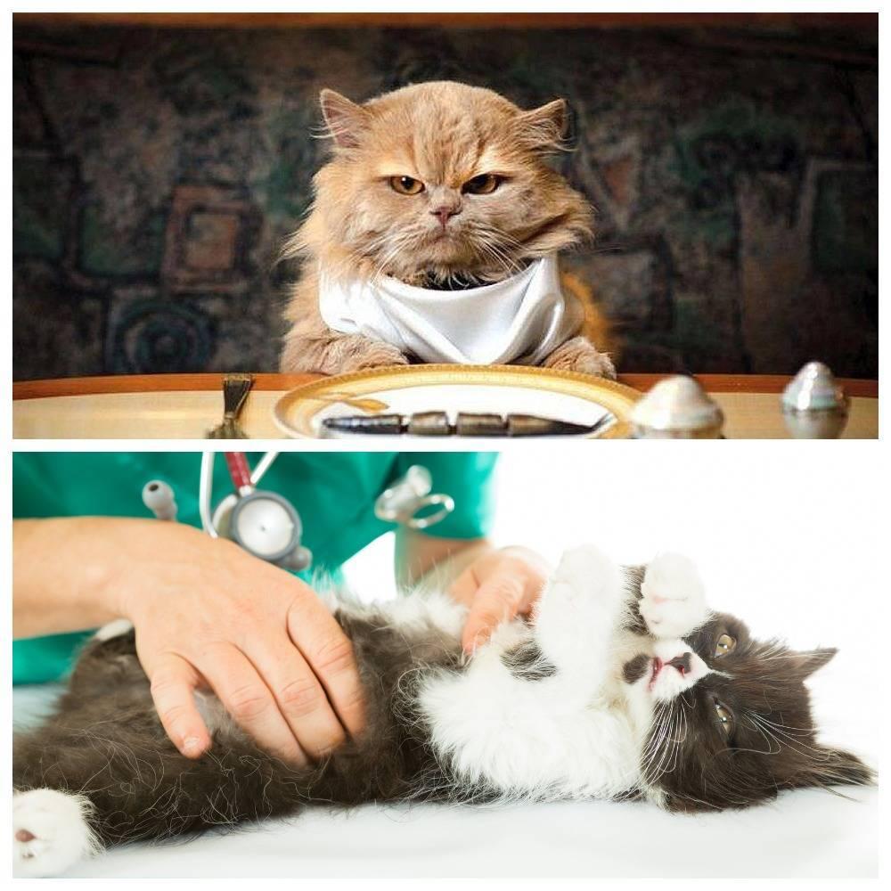 Сколько кошка проживет без еды и воды: суточная норма