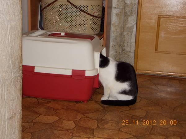 Как приучить кота к лотку на новом месте? способы приучения кошки или котенка к лотку в новом доме