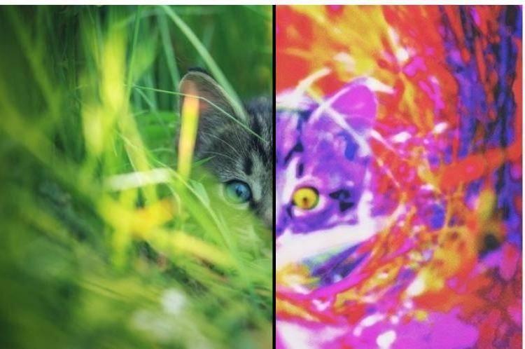 Какие цвета видят кошки – какие различают