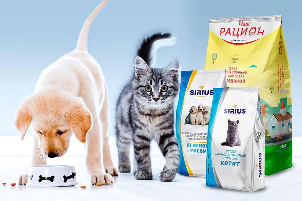 Шампунь для кошек: основные виды, популярные марки, отзывы
