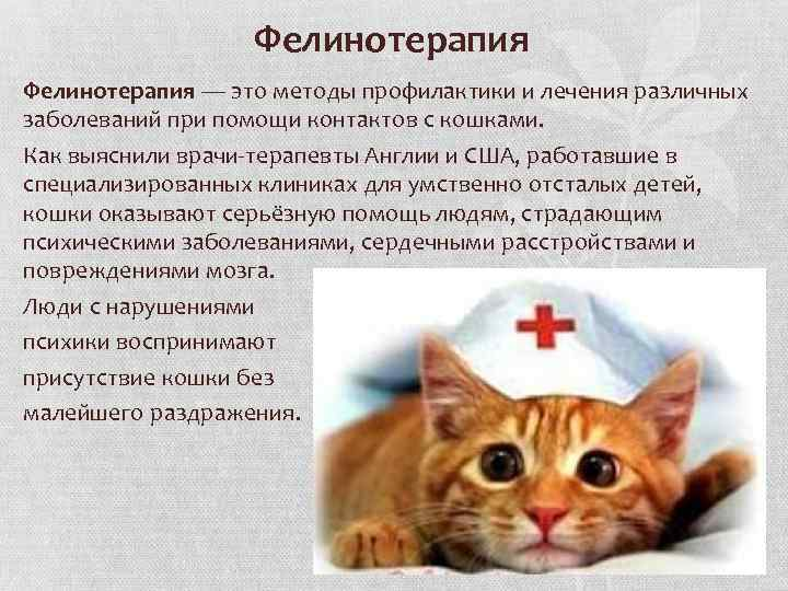 Почему и как кошки лечат людей от различных недугов