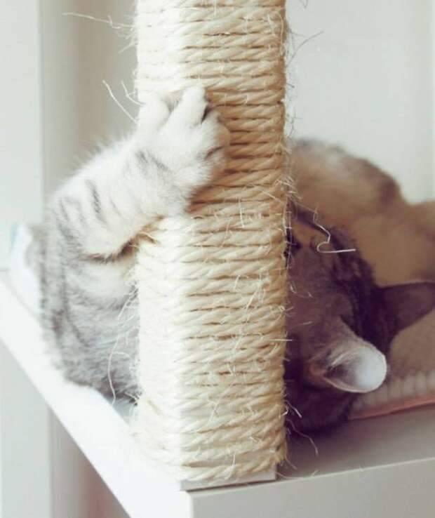 Когтеточка для кошек своими руками — способ уберечь поверхности