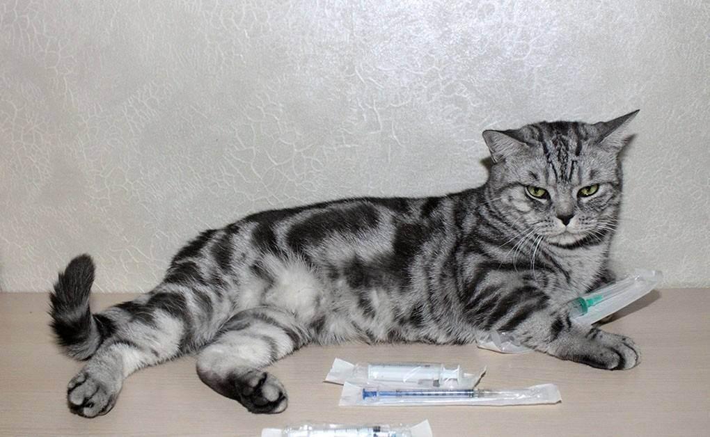 Учимся делать уколы для кошек внутримышечно и подкожно в домашних условиях