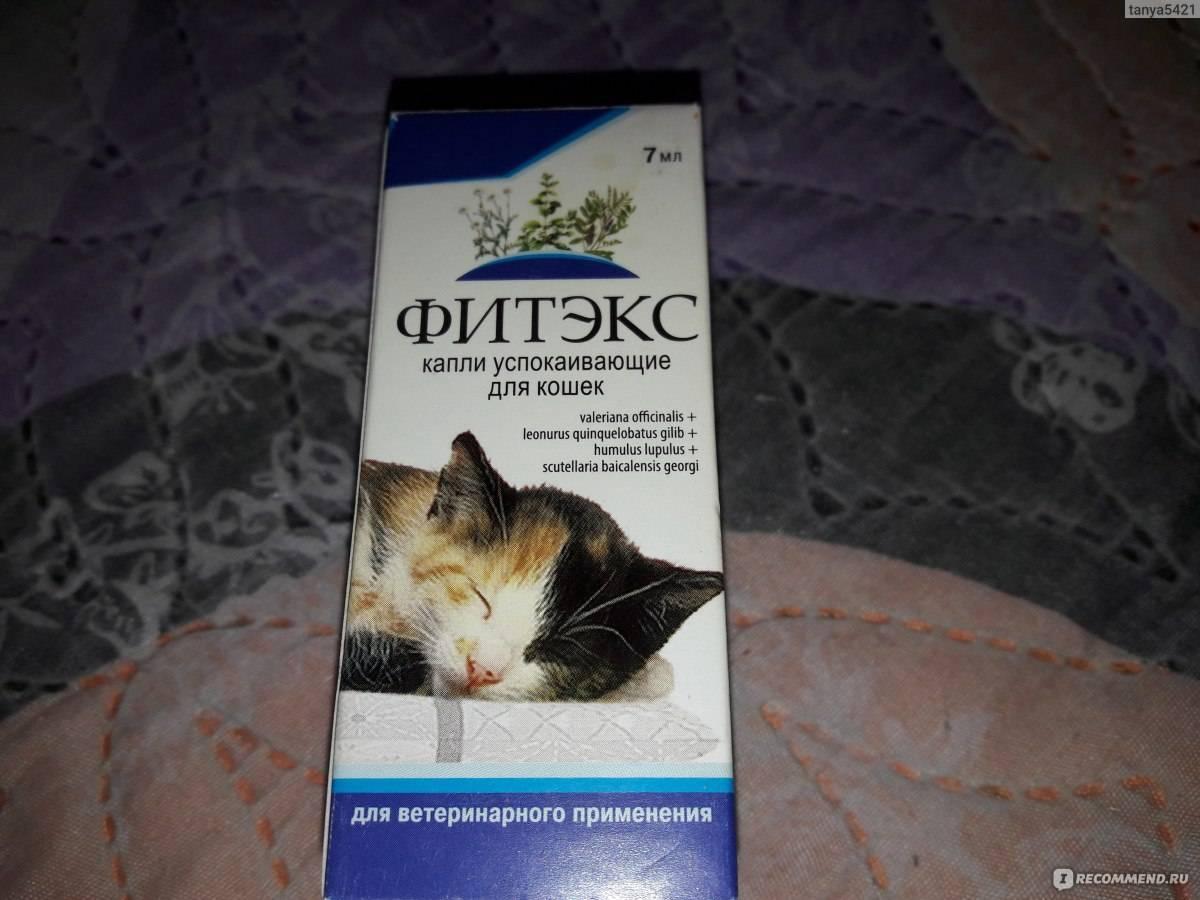 Успокоительное для кошек: виды препаратов, как выбрать, обзор популярных средств, отзывы