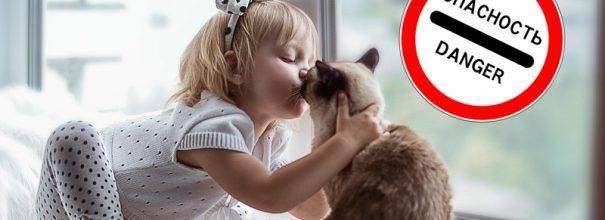 Почему нельзя целовать кошек и котов | в морду, в нос, видео