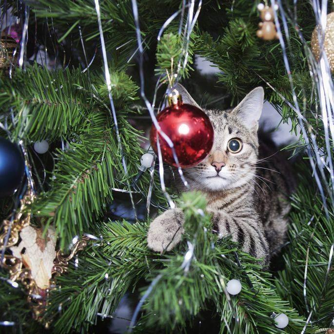 Кот съел дождик с елки что делать? ситуация не редкая