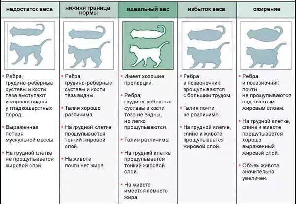 Высококалорийные корма для кошек для набора веса. как и чем кормить кошку, чтобы она набрала вес: правила питания и рацион