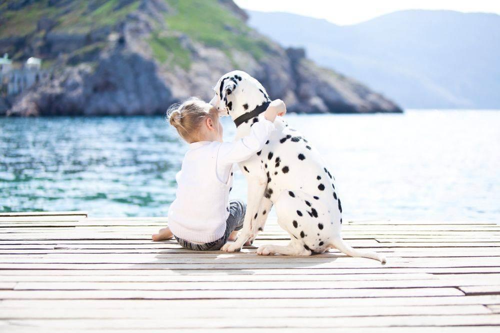 Как уговорить родителей завести собаку (55 фото): переубедить бабушку, попросить маму взять щенка, как заставить приобрести