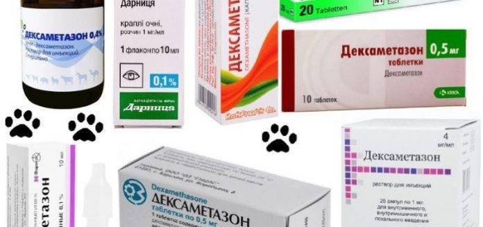 Дексаметазон – инструкция применения для владельцев собак и кошек
