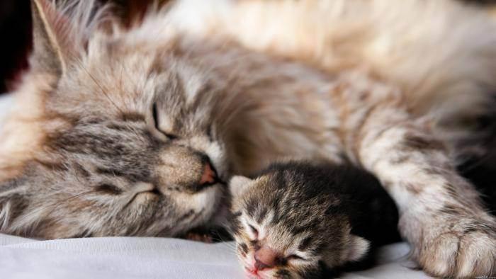 У кошки после родов остался большой живот, что это может означать