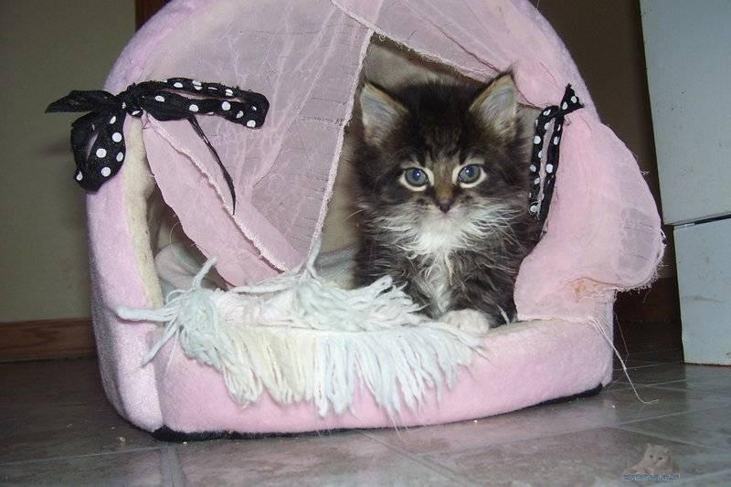 Как приучить кошку к утепленному домику