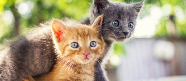 Мочекаменная болезнь. как помочь кошке и уберечь своего любимца от недуга