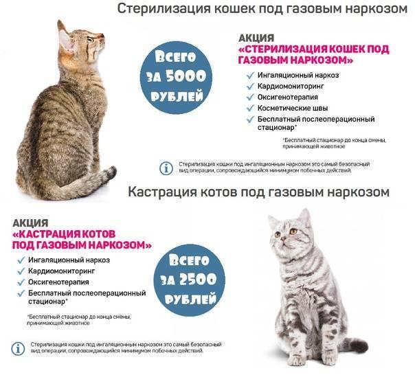 Стерилизация кошки: плюсы и минусы. когда лучше делать стерилизацию кошки