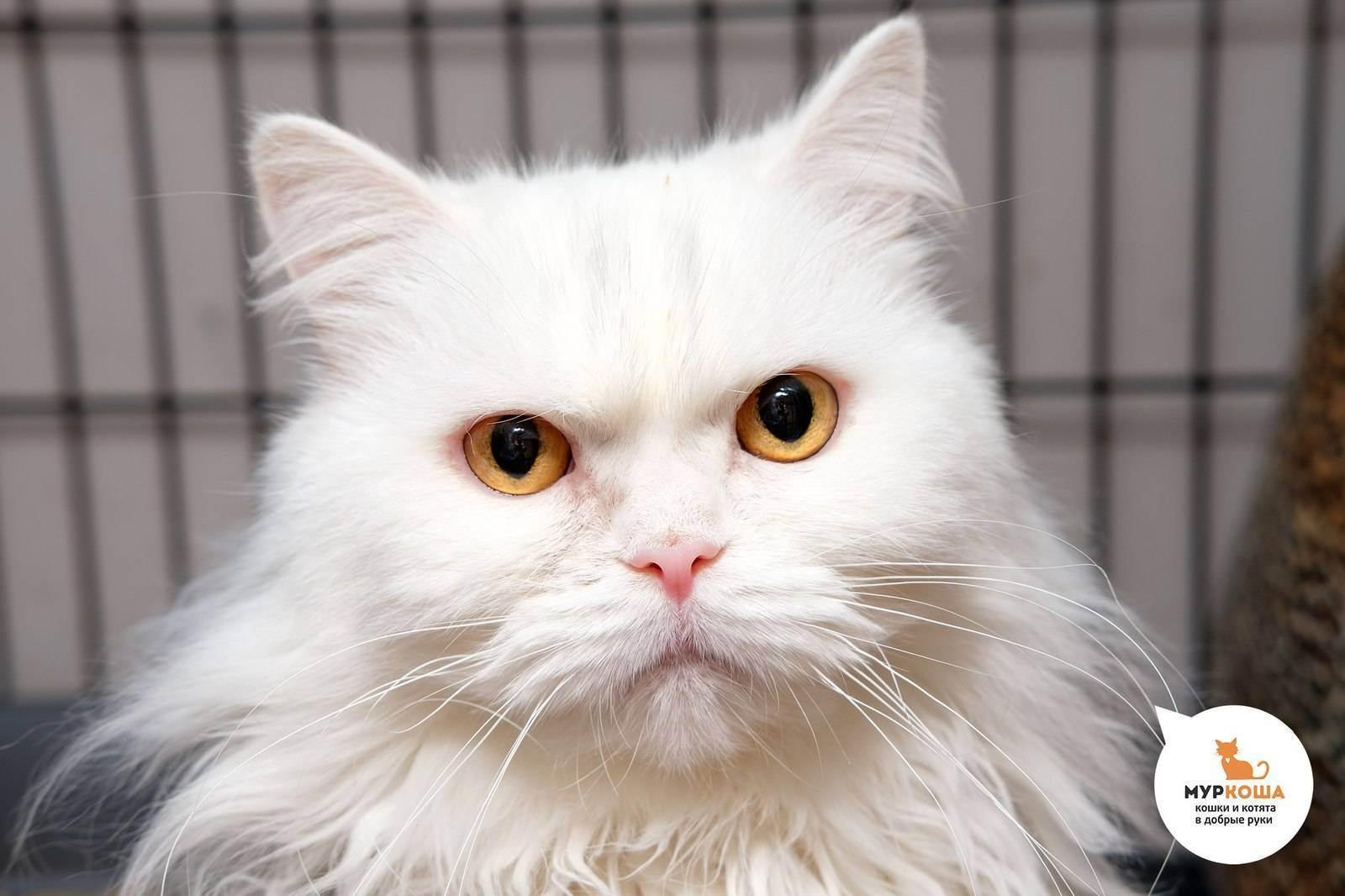 Хочу взять котенка
