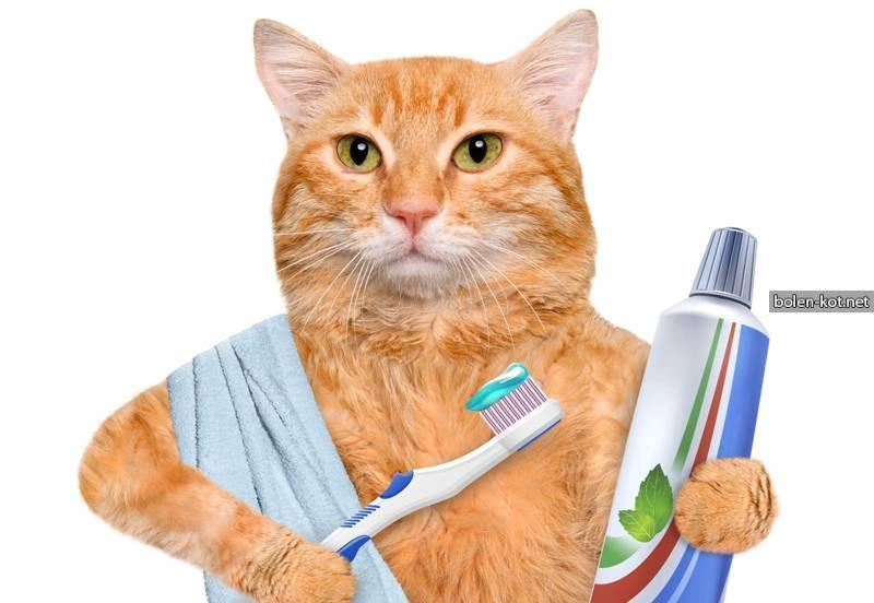 Как можно почистить зубы кошке в домашних условиях