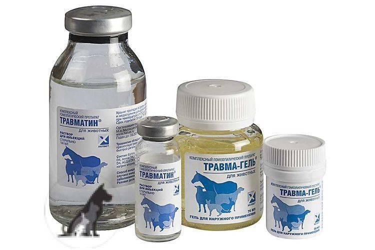 Инструкция по применению травматина для кошек: состав препарата, терапевтические свойства, отзывы ветеринаров