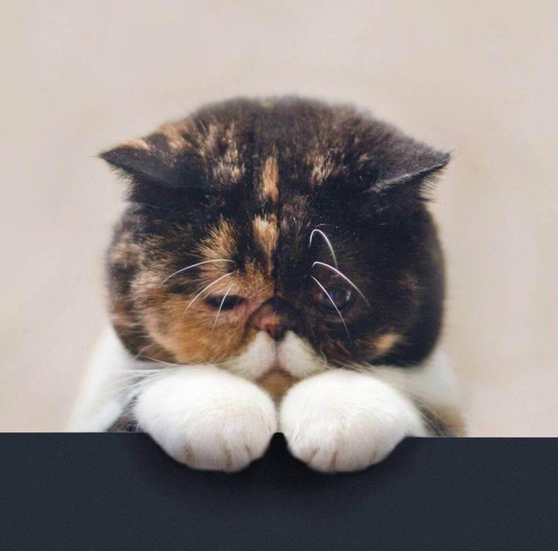 Журнал о кошках, котах и котятах