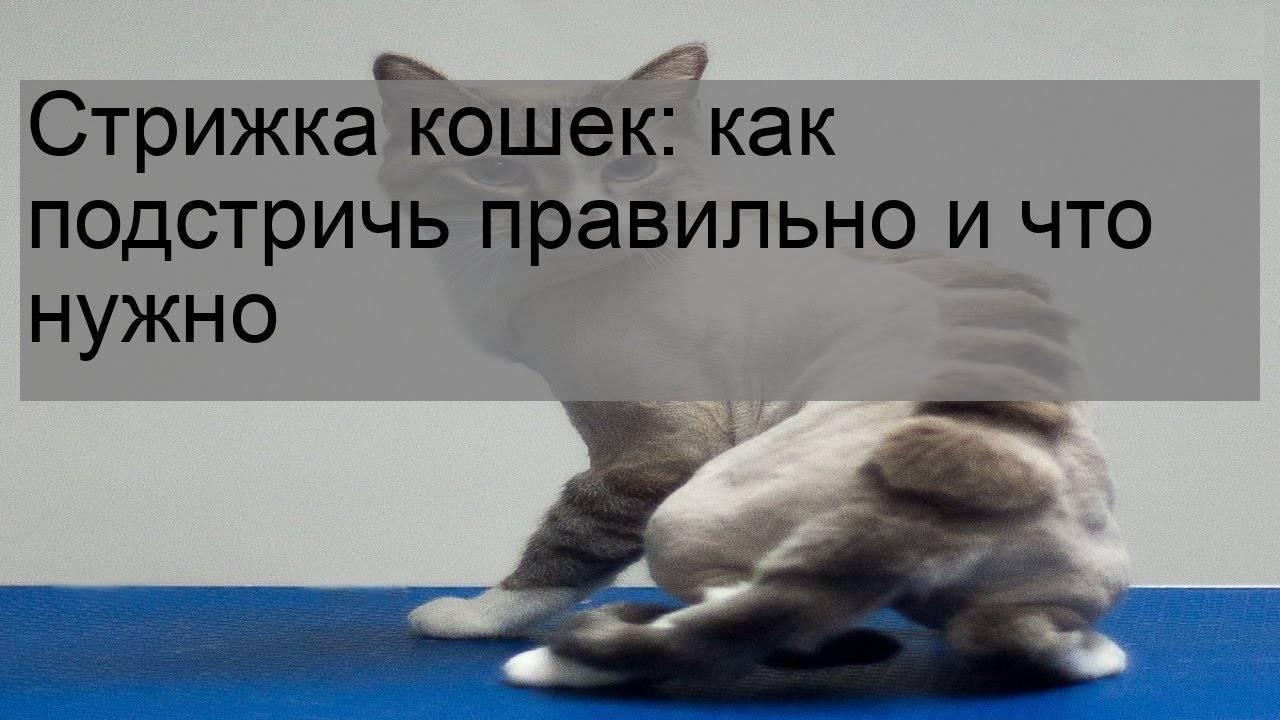 Стресс у кошки: причины, симптомы, успокоительные средства