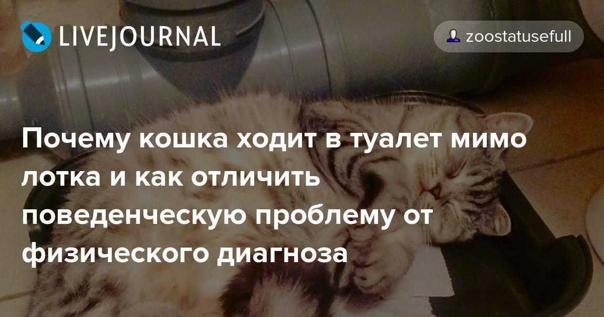 Почему кот писает в лоток а какает рядом