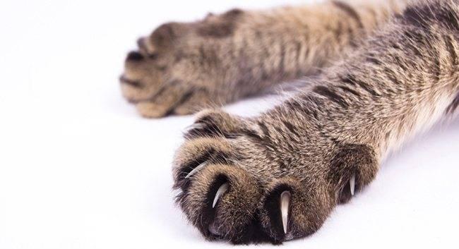 Особенности строения скелета кошек