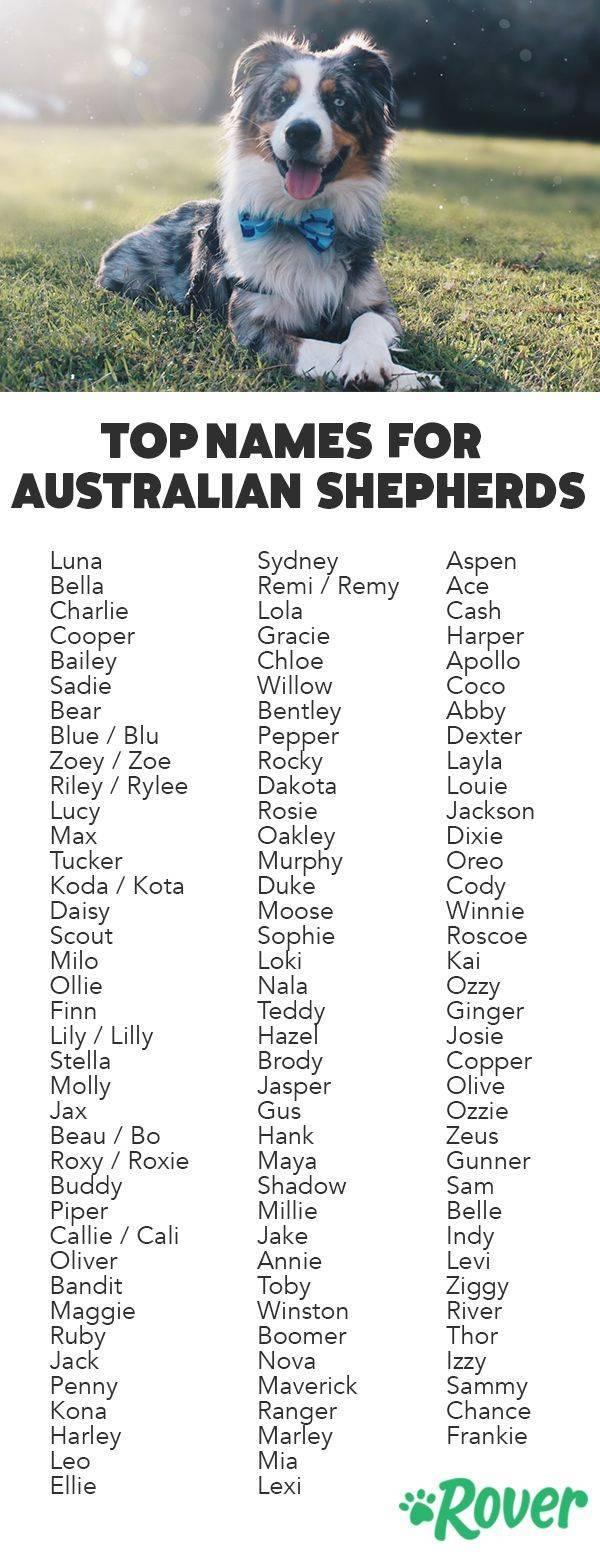 Клички для собак девочек — выбираем имя своему питомцу правильно