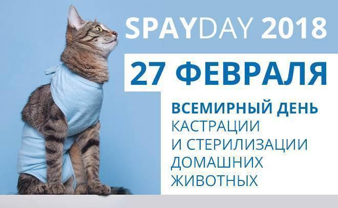 Стоит ли кастрировать/стерилизовать домашнего любимца? - запись пользователя екатерина (ket_star) в сообществе домашние животные в категории интересное о животных - babyblog.ru