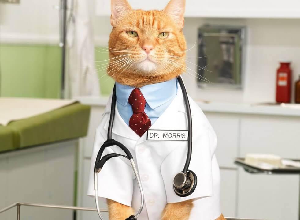 Как выбрать ветеринара?