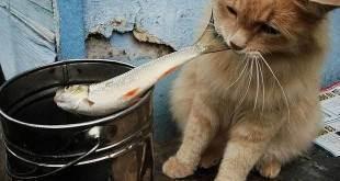 Почему кошки боятся воды: причины страха, правила купания в домашних условиях, можно ли приучить кота к водным процедурам, видео