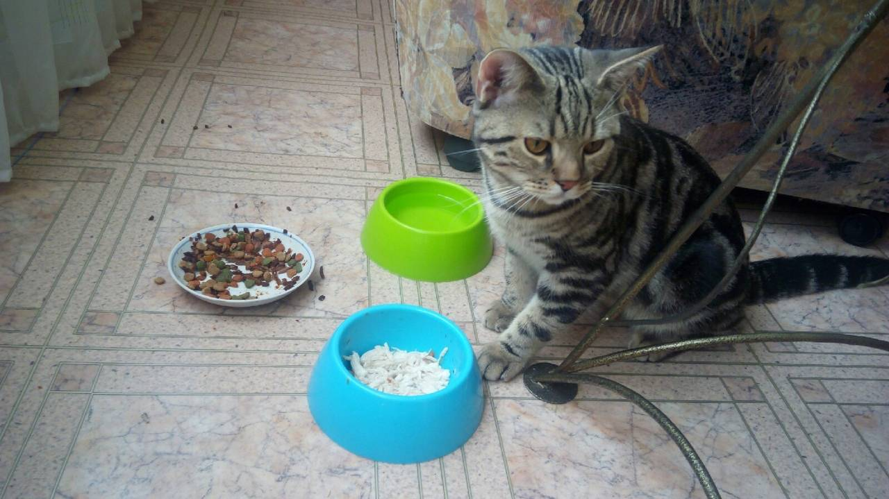 Сколько кот может прожить без воды и еды сколько кот может прожить без воды и еды