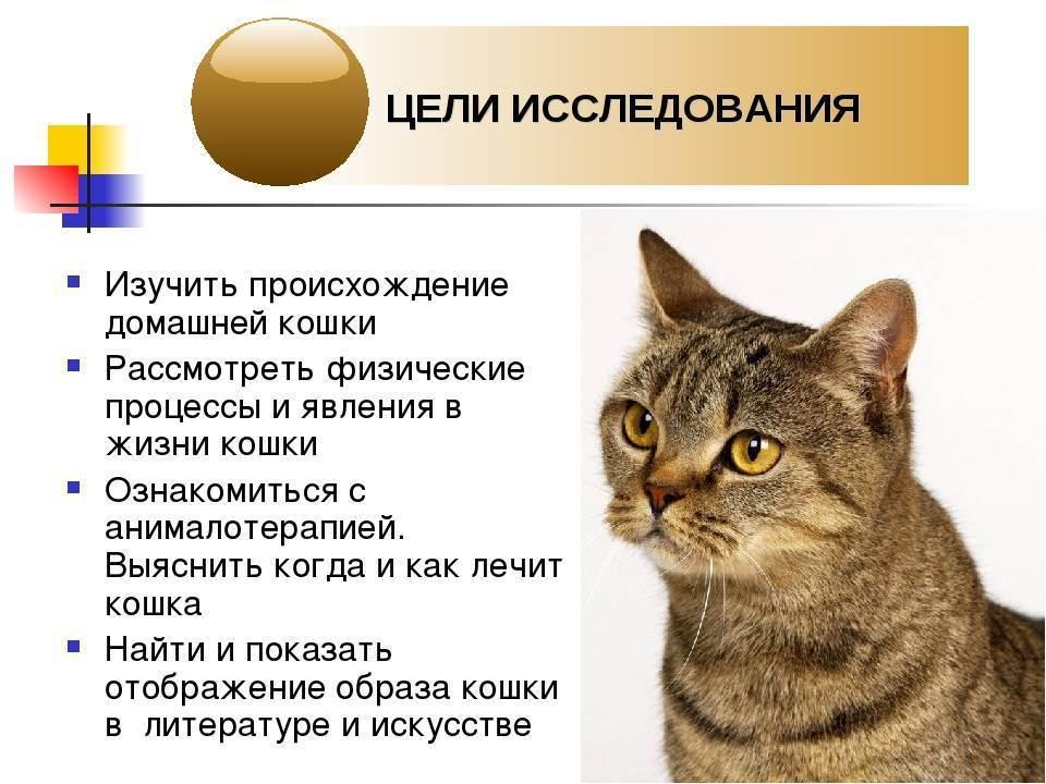 В каком возрасте у кошки начинается первая течка: во сколько месяцев