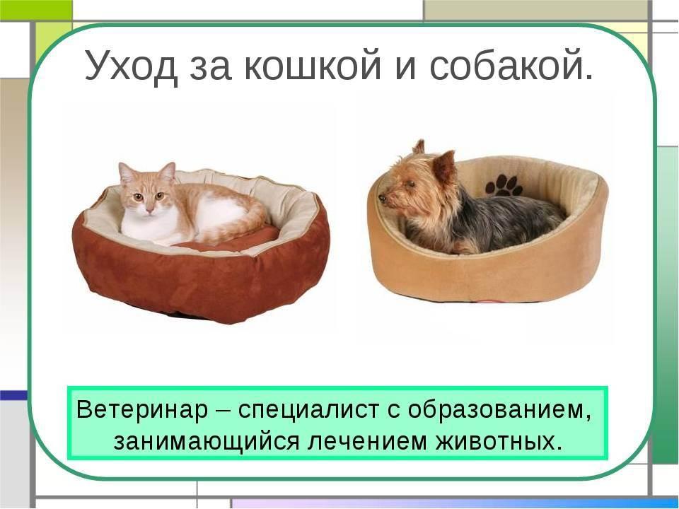 Как ухаживать за кошкой и котом в домашних условиях