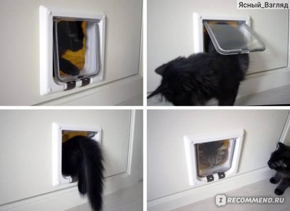 Двери для кошек: виды проходов и как сделать дверку своими руками