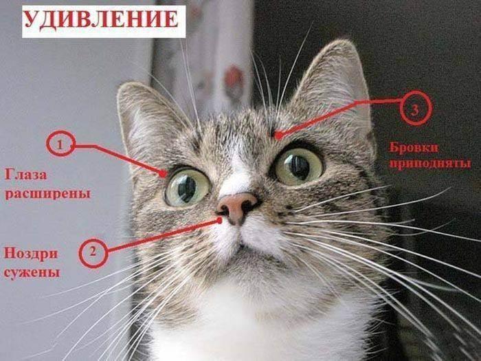 Почему кот смотрит в одну точку?