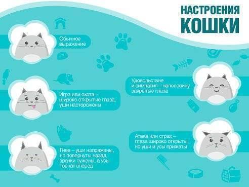 Как понимать кошку: учимся понимать что от нас хочет кошка. простые советы и полезная информация для владельцев кошек (80 фото)