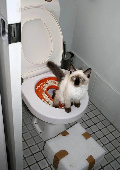 Как часто какают котята и писают, сколько раз в день, как понять, что он хочет в туалет