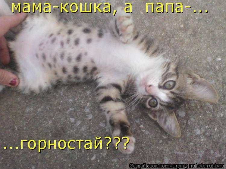 Все что необходимо знать о кошачьем пупке: есть он или нет у кошки и кота