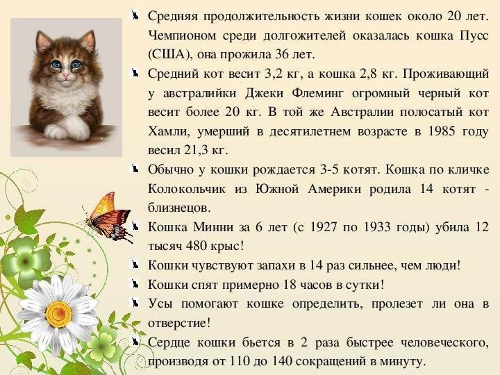 Сколько живут кошки в домашних условия - как продлить жизнь коту?
