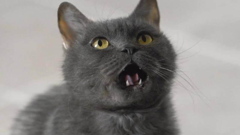 Кот мяукает в туалете