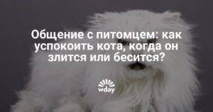 Как успокоить кошку: во время течки, в дороге, перед ветеринаром | zoosecrets