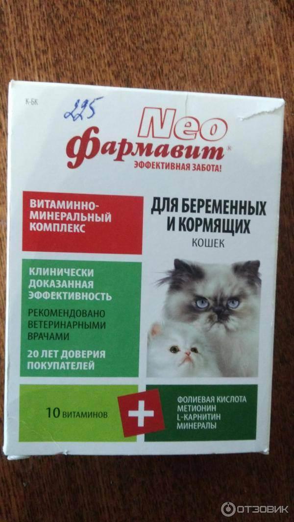 Какие витамины для кошек лучше: для шерсти, от выпадения, для беременных или 8 в 1