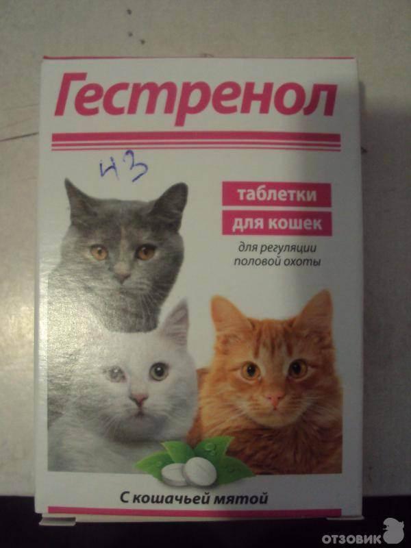 Кот блюет шерстью, что делать, когда у животного образуются трихобезоары в желудке