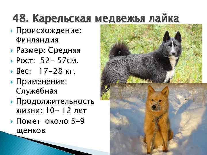 Сколько лет живут собаки? возраст собак по человеческим меркам