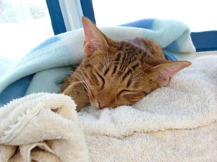 Распространённые болезни у кошек: симптомы и лечение
