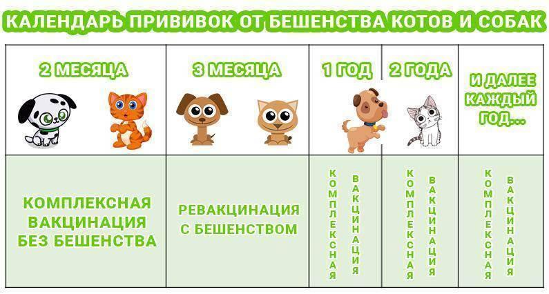 Календарь прививок для кошек