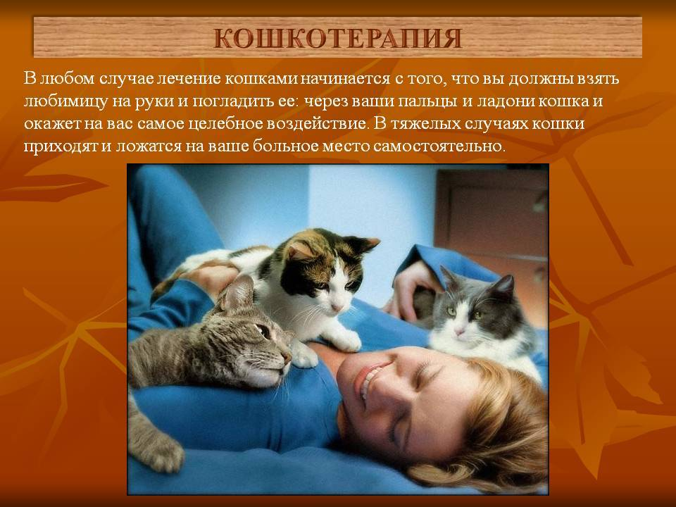 Чем полезны кошки