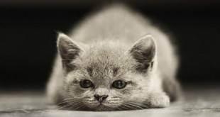 Статьи - подготовка к приезду котенка - eastward-cats