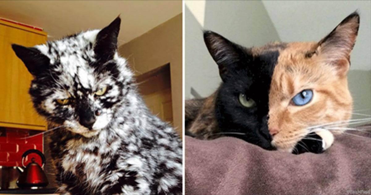 10 самых странных пород кошек в мире