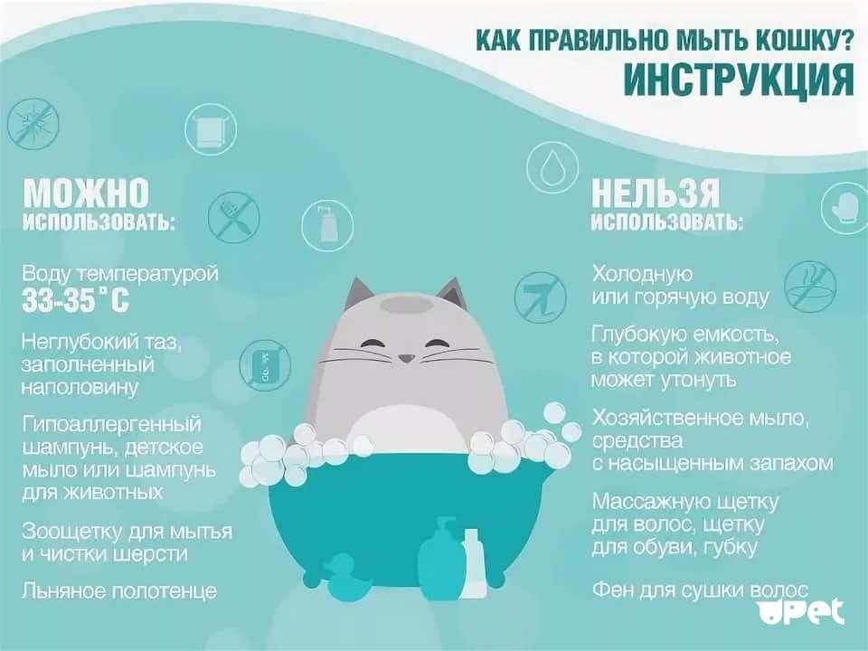 Как помыть кота в ванне без царапин и ссадин