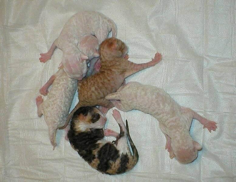 Понос у новорожденного котенка: причины, последствия, перва помощь