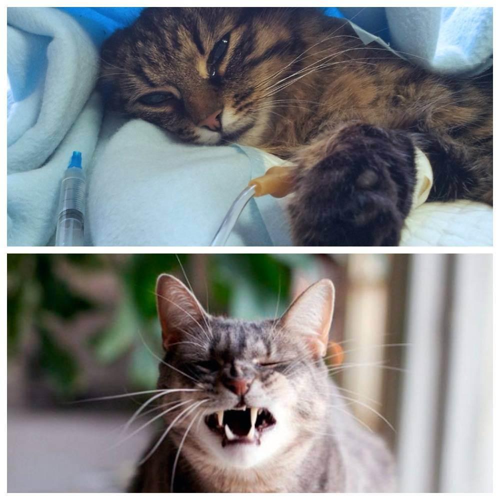 Болезни печени у кошек